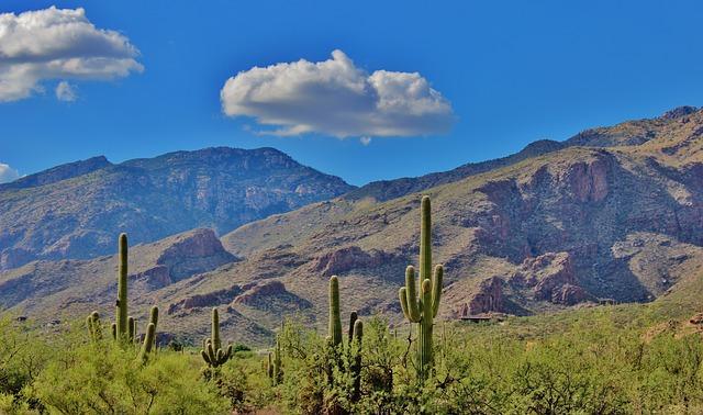 Arizona cacti photo